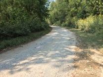 Butterfly road 2