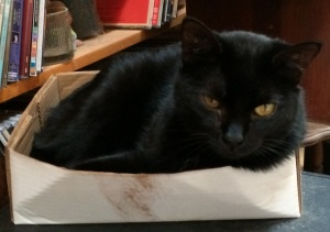 More Cat Than Box