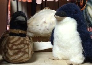 Nene Fairy penguin