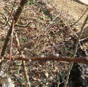 Feb Cabin blurry peach limb