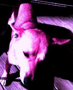 Feb Cabin mutated barky