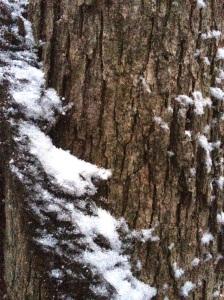 Snow on tree vine