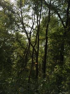 Trees skinny leaning