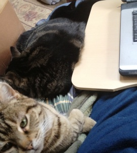 Cats at My Desk