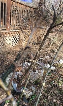 Feb Cabin fruit tree line