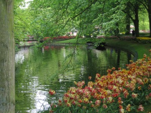 Holland Ke parrot tulips on water