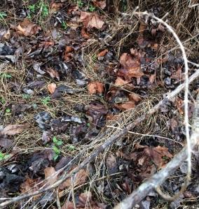 Weed Stems Leaves