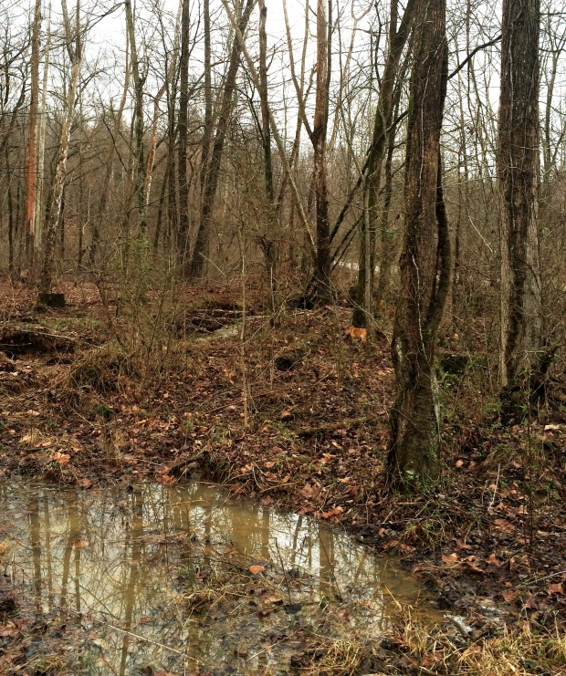 Whole Creek