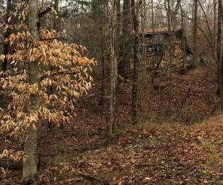 Woodland Cabin