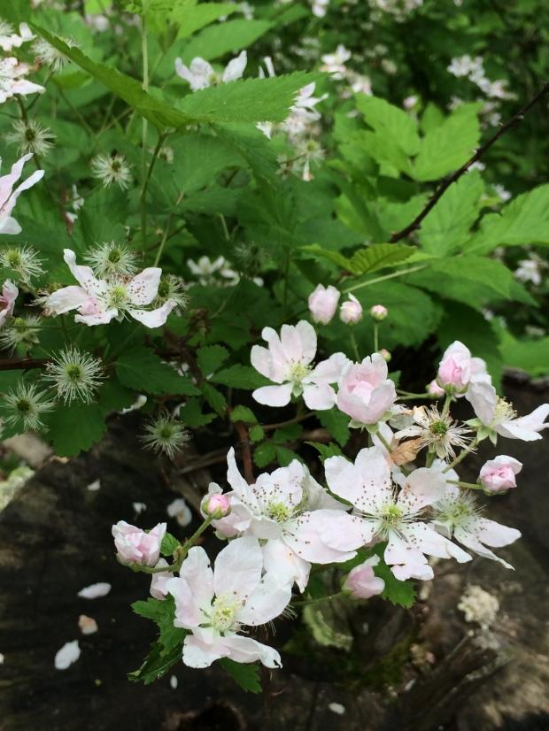 Cabin bb blooms close