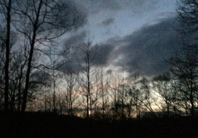 Dark Woods 1