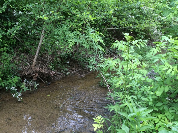 Cabin creek ripple