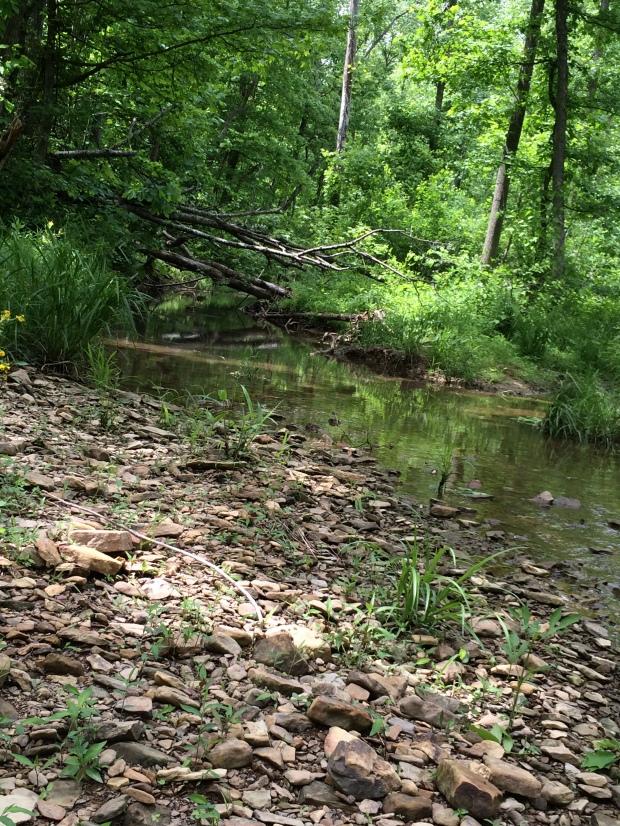 Cabin creekside