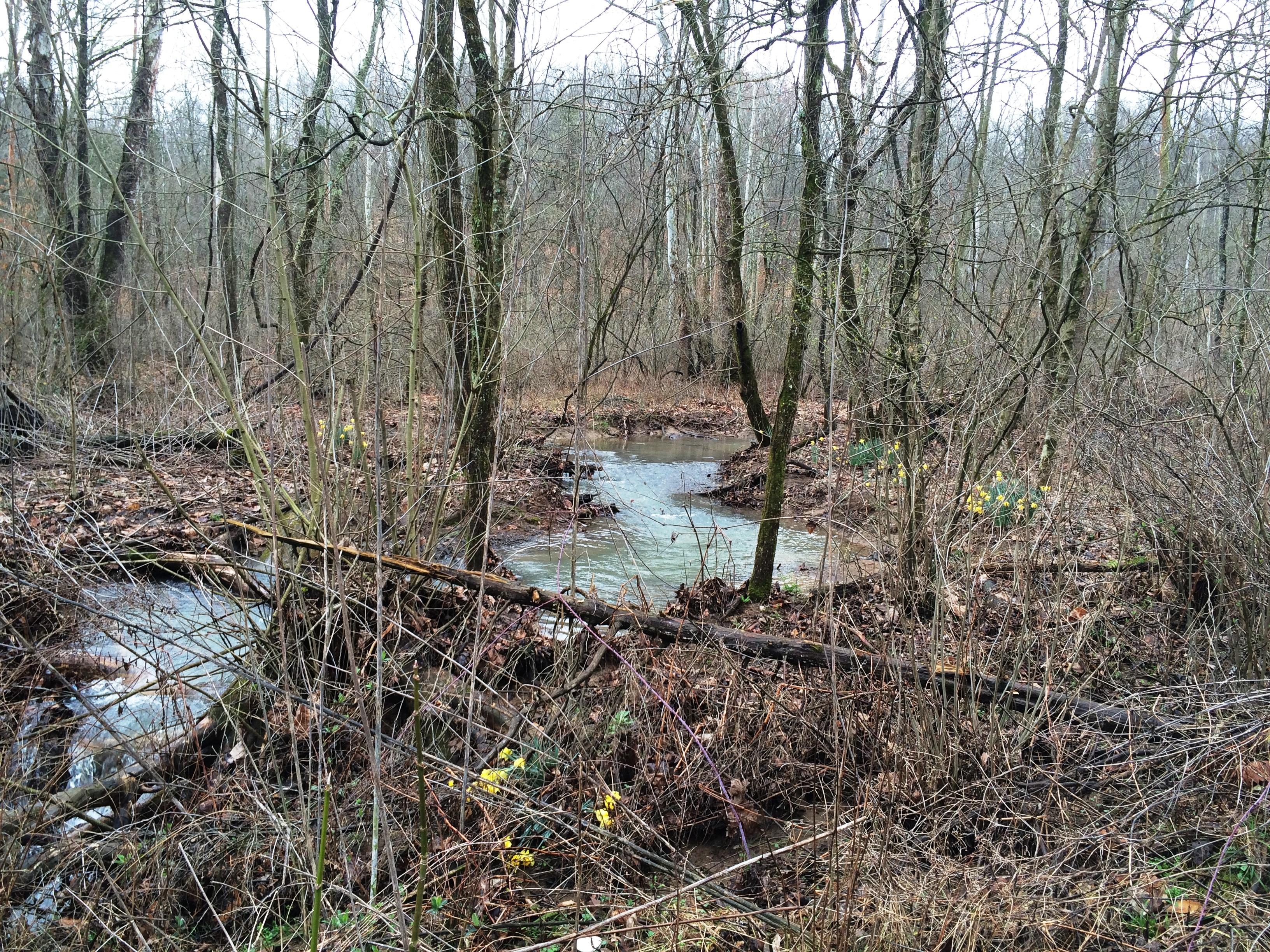 Woods Water Narcs